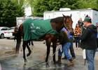 Watch Video. Preakness news update