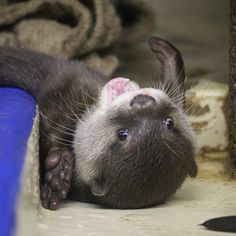 Otter pup looks so happy and playful! - July 18, 2016