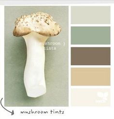 Image result for light mushroom color, medium mushroom color, white color, apple green color and chocolate color