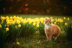 Wanna play hide and seek? by lichtmaedel, via Flickr