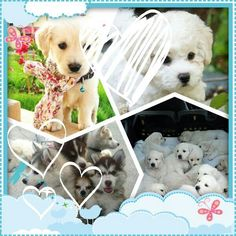 Pretty dog pictures