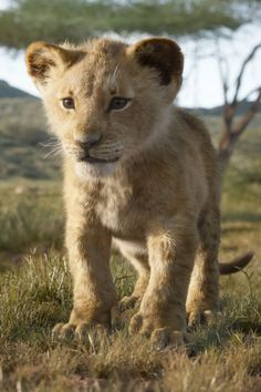 Let's be honest: the best part of any classic Disney film is the music. That's why we're SO ready for the soundtrack of the live-action reboot of The Lion Watch The Lion King, Lion King Movie, Lion King Art, Lion King Simba, Disney Lion King, Le Roi Lion Film, Lion King Soundtrack, Images Roi Lion, Baby Animals