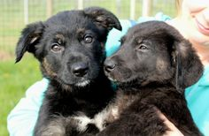 Adorable pups... ADOPTED!