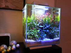 Sophisticated Elegance. I would SO do this, without the fish, with just plants and a grow light!