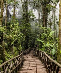 Adventure calls!  On the path of new discoveries through the cloud forest of @peacelodgeandwaterfallgardens  by @crherrera! #CostaRicaExperts #CostaRica