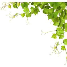 Collage of vine leaves ❤ liked on Polyvore featuring backgrounds