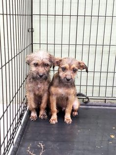 "At the Texas Animal Control in Odessa, not one dog was adopted on Tuesday. Not one dog was saved by a rescue organization after volunteers from the group Speaking Up For Those Who Can't. ""The shelter has 153 animals right now. They can not have more than 150 at closing and animals are still pouring …"