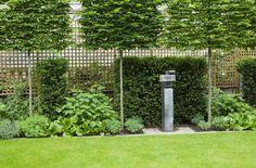 Sichtschutz Garten Bäume immergrüne Pflanzen Holz Zaun