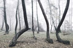No One Knows What Created This Forest of Deformed Trees | The Creators Project