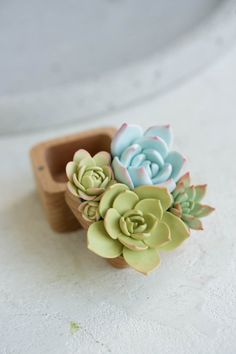 Only one Green Blue Succulent Ring Box Wood Square Engagement Polymer Clay Crafts, Diy Clay, Polymer Clay Jewelry, Blue Succulents, Pink Succulent, Cute Clay, Goth Art, Wood Square, Clay Animals