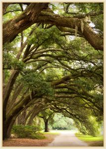 Oak Archway with Border in Charleston, SC  ~YES...want to go back when we can spend more time!!~