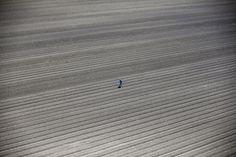 Le foto finaliste ai Sony World Photography Awards - Il Post Professionisti - Ambiente La siccità californiana dall'alto Un lavoratore cammina tra i campi a Los Banos, California, Stati Uniti, il 5 maggio 2015 (© Lucy Nicholson, UK, Shortlist, Professional , Environment, 2016 Sony World Photography Awards)