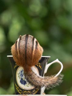 """Whimsical Wall Art """"Tea Time"""" Chipmunk on a Tea Cup Photo Print Hamsters, Rodents, Animals And Pets, Funny Animals, Cute Animals, Little Critter, Cute Animal Pictures, Chipmunks, Animal Kingdom"""