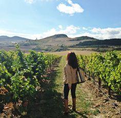 Mi día entre los viñedos de la Bodega Otazu #vino #wine #vin #escultura