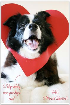 Valentine's surprise with your dog - takes 5 minutes | Pretty Fluffy