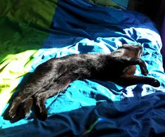 What makes a black cat black? You can see that she has a reddish undertone in certain light.