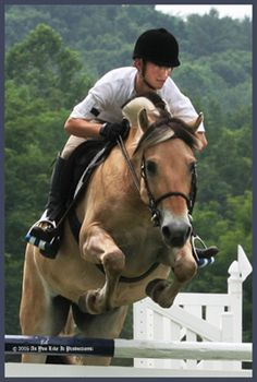 To acquire Horse Fjord jumping pictures picture trends