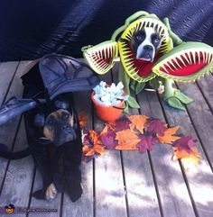 Venus fly trap and fly dog costumes cute animals halloween crafts diy costumes costume ideas dog costumes pet costume ideas
