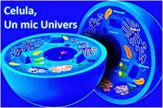 OPINII PERSONALE: Celula... un mic sau... urias... univers ?!!? Cine, cum si de ce... a proiectat celula?