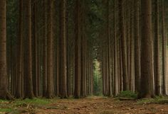 Alone with Trees by Karsten Rademacher on 500px