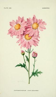 v.9 (1924) - Addisonia : - Biodiversity Heritage Library