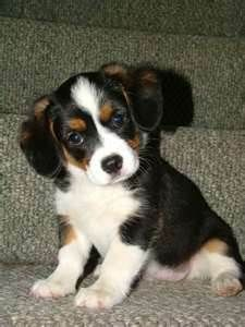 I also want this dog!