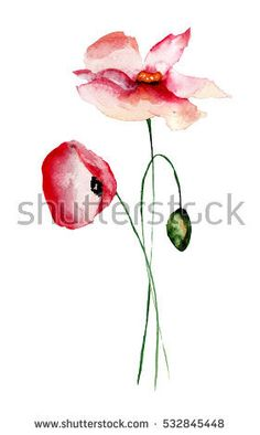 Beautiful Poppy Flowers, Watercolor Painting  Stock Photo 532845448 : Shutterstock