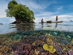 Regreso al paraíso · National Geographic en español. · Reportajes-Bahía de Kimbe  Este delicado jardín de coral se salva de las tempestades gracias al abrigo que le proporciona una península cercana. Los arrecifes de Kimbe contribuyen al sustento de los pescadores del lugar, algunos de los cuales todavía utilizan las tradicionales canoas de batanga. http://daviddoubilet.com
