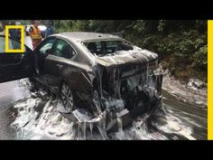 Watch: Slime Eels Explode on Highway After Bizarre Traffic Accident | National Geographic #news #alternativenews