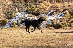 Hundezonen-Österreich-App - Promocodes zum GRATIS-Download Gratis Download, App, Pet Dogs, Apps