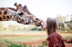 Dine With Endangered Rothschild Giraffes at the Giraffe Manor Sanctuary-Hotel in Kenya