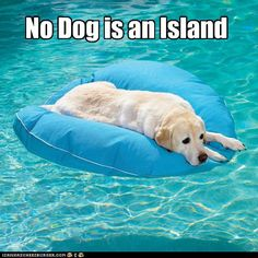 But Some Dogs Do Hog The Floaties