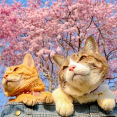 Cats Fuku-Chan and Daikichi find fame travelling around the world - Ego - AlterEgo Travel Around The World, Around The Worlds, Invite Your Friends, Travelling, Kitty, Japan, Cats, Photography, Animals