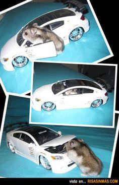 Hamster arreglando su coche http://www.alquiler.com/motor