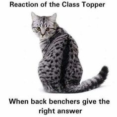 School memories Part 2 Funny Pictures With Captions, Funny Picture Quotes, Funny Images, Funny Quotes, Crush Memes, Disney Memes, Spongebob, Laughing Jokes, Friends Moments