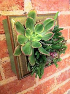 Succulent Wall Garden by KMcWdesigns on Etsy, $48.00