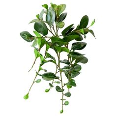 Hanging Marbled Jade Foliage, 23'' Jade, Green Plants, Hanging Planters, Artificial Plants, Houseplants, Plant Leaves, Marble, Decoration, Style