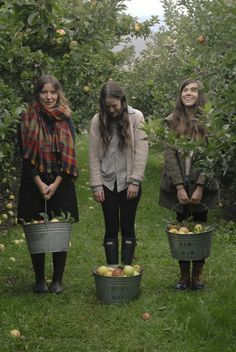 Go apple picking in an orchard x