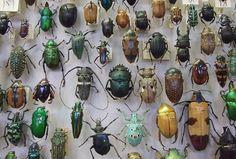 bio-beetles