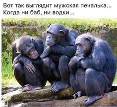 Фото Три опечаленные обезьяны (Вот так выглядит мужская печалька. Когда ни баб, ни водки.)