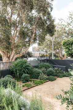 Australian Garden Design, Australian Native Garden, Outdoor Landscaping, Outdoor Gardens, Landscaping Ideas, Courtyard Gardens, Coastal Landscaping, Home Garden Design, Backyard Garden Design