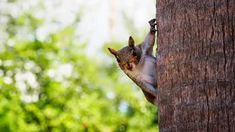 Discover amazing things and connect with passionate people. Animal Photography, Cute Animals, Cats, Google, Collections, Secret Service, Neuroscience, Squirrels, Mother Earth