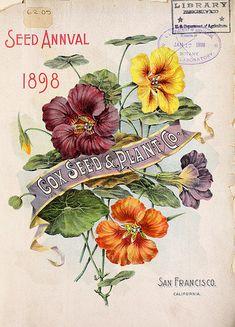 Nasturtiums. Cox Seed Annual (1898)