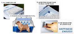Pet Cooler Carrier Review!