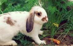 New Uses for Cotton Balls - Surprising Cotton Ball Uses New Uses, Good Housekeeping, Going Vegan, Good To Know, Animals Beautiful, Clever, Balls, Cotton, Bunny