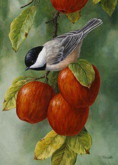 Apple and Chickadee III (Crista Forest)