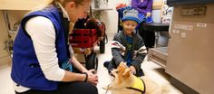 Study to Show Impact of Therapy Dogs on Cancer. Lucy's Love Bus offers animal assisted therapy among the many integrative therapies we fund for kids with cancer. :)