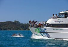 Find and book Hole in the Rock Cruise options departing from Paihia or Russell in the beautiful Bay of Islands, New Zealand. Island Cruises, Bay Of Islands, Rock Island, Auckland, The Rock, Dolphins, New Zealand, Safari, Boat