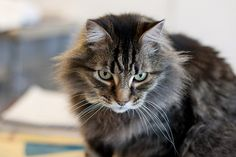 Cat Hair Helps Convict Man for Murder