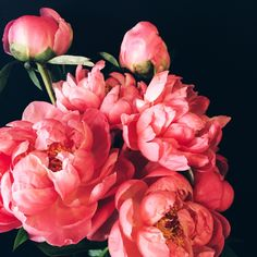 thegirlwiththelittlecurl:  I'm thinking about turning some of my flower photos into prints.